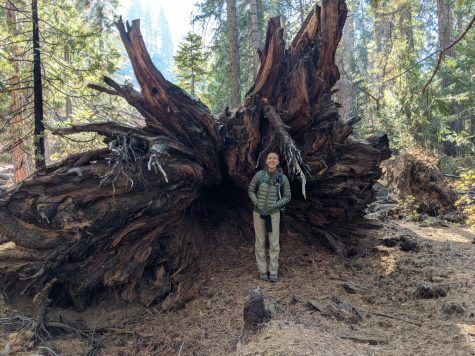 Kelly Aidan at Sequoia National Park standing next to a fallen tree which used to stand at 270 feet.